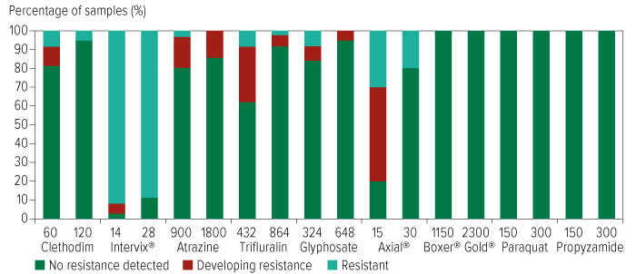 Figure showing percentage of samples with levels of herbicide resistance where herbicides were applied at half and full receommended label rates to Annual Ryegrass