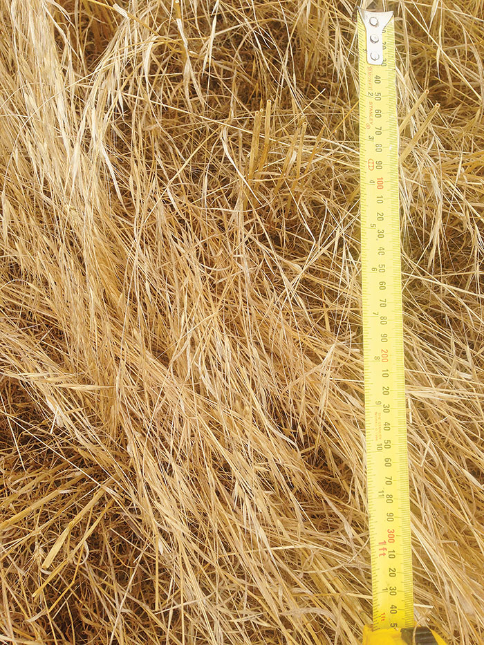Brome grass treatment cut high (35cm) without windrows