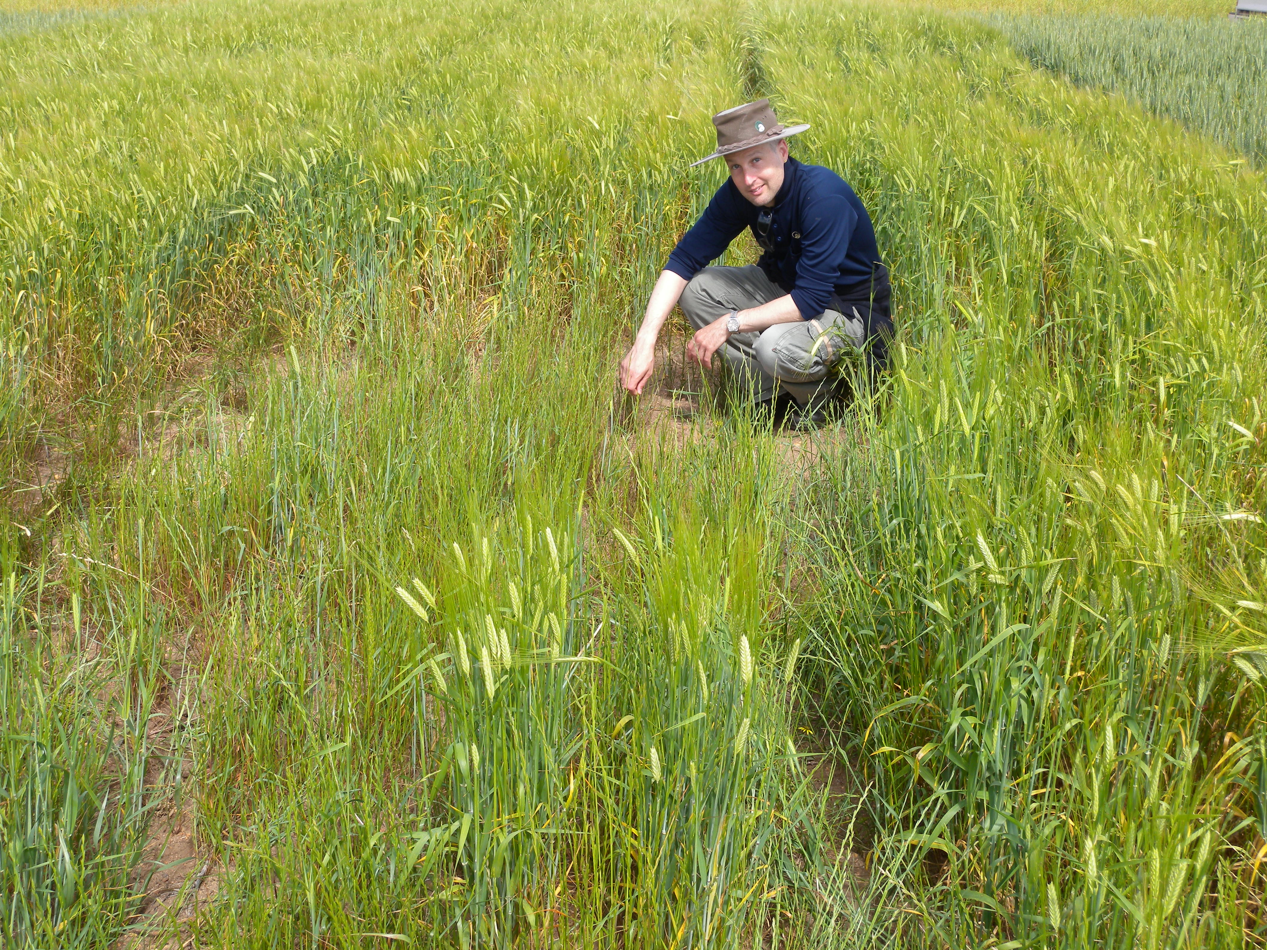 DAFWA plant pathologist Daniel Huberli says there are more options for at-seeding management of rhizoctonia bare patch this year