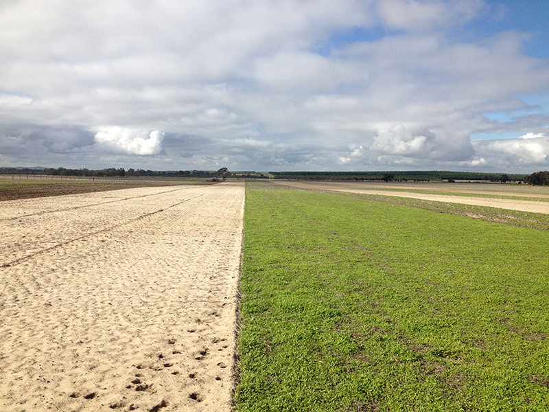 The Brookton trial site after it had been spaded, left, compared with the control plot.