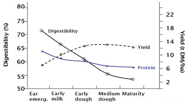 Graph showing digestibility decreases from ear emergence through to maturity, as does protein, while yield increases
