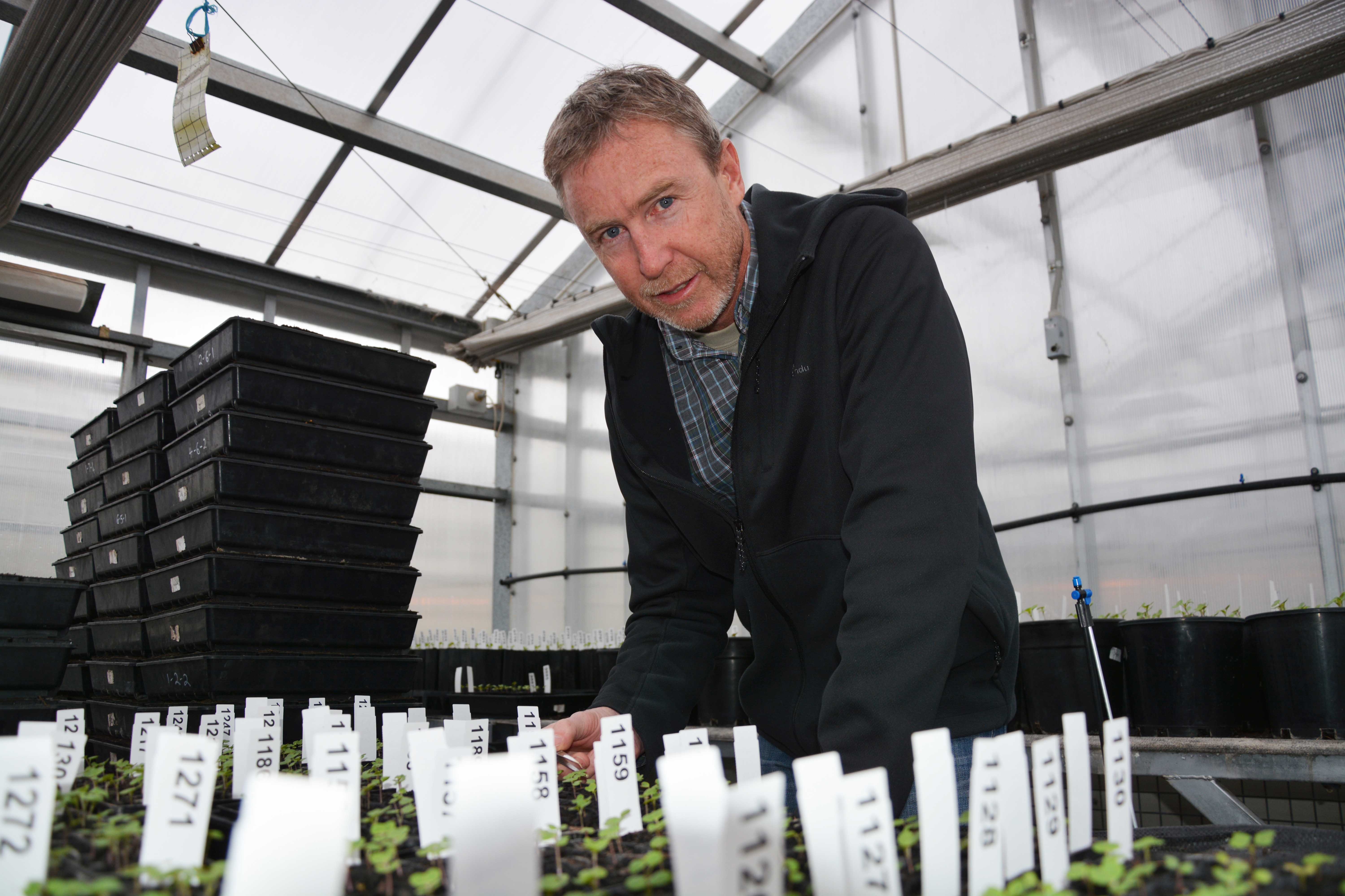 Steve Marcroft in a glasshouse