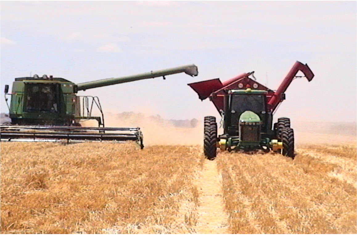Picture of machines at harvest