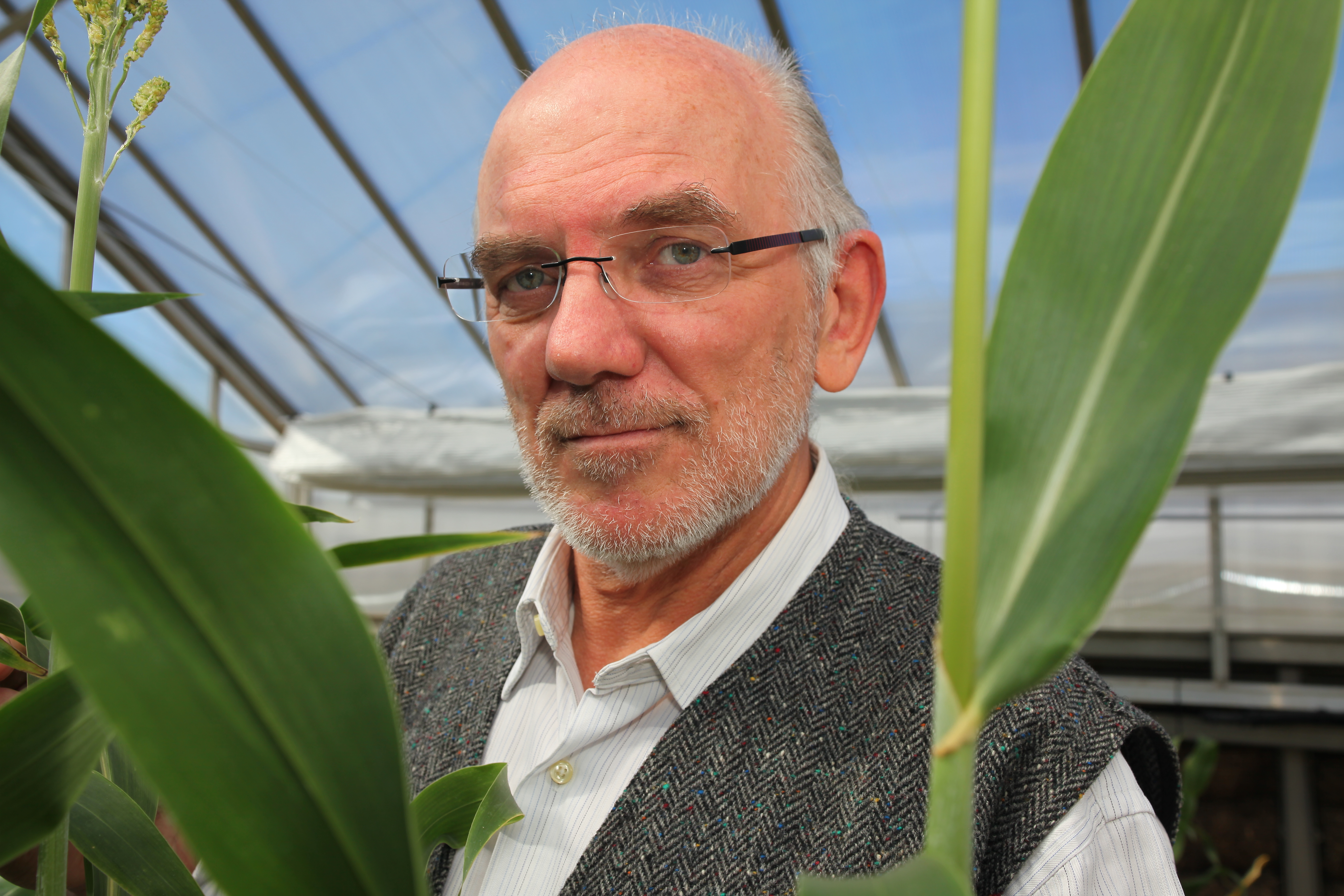 Image of Professor Graeme Hammer, Director of the University of Queensland's Centre for Plant Science at the Queensland Alliance for Agriculture and Food Innovation (QAAFI).