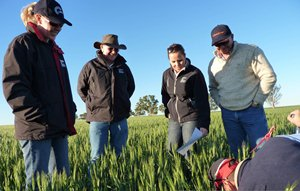 From left, GRDC western panellists Narelle Moore, Paul Kelly, Susan Hall and GRDC director Richard Brimblecombe look on as Farmanco consultant David Cameron inspects a wheat crop at Buntine.