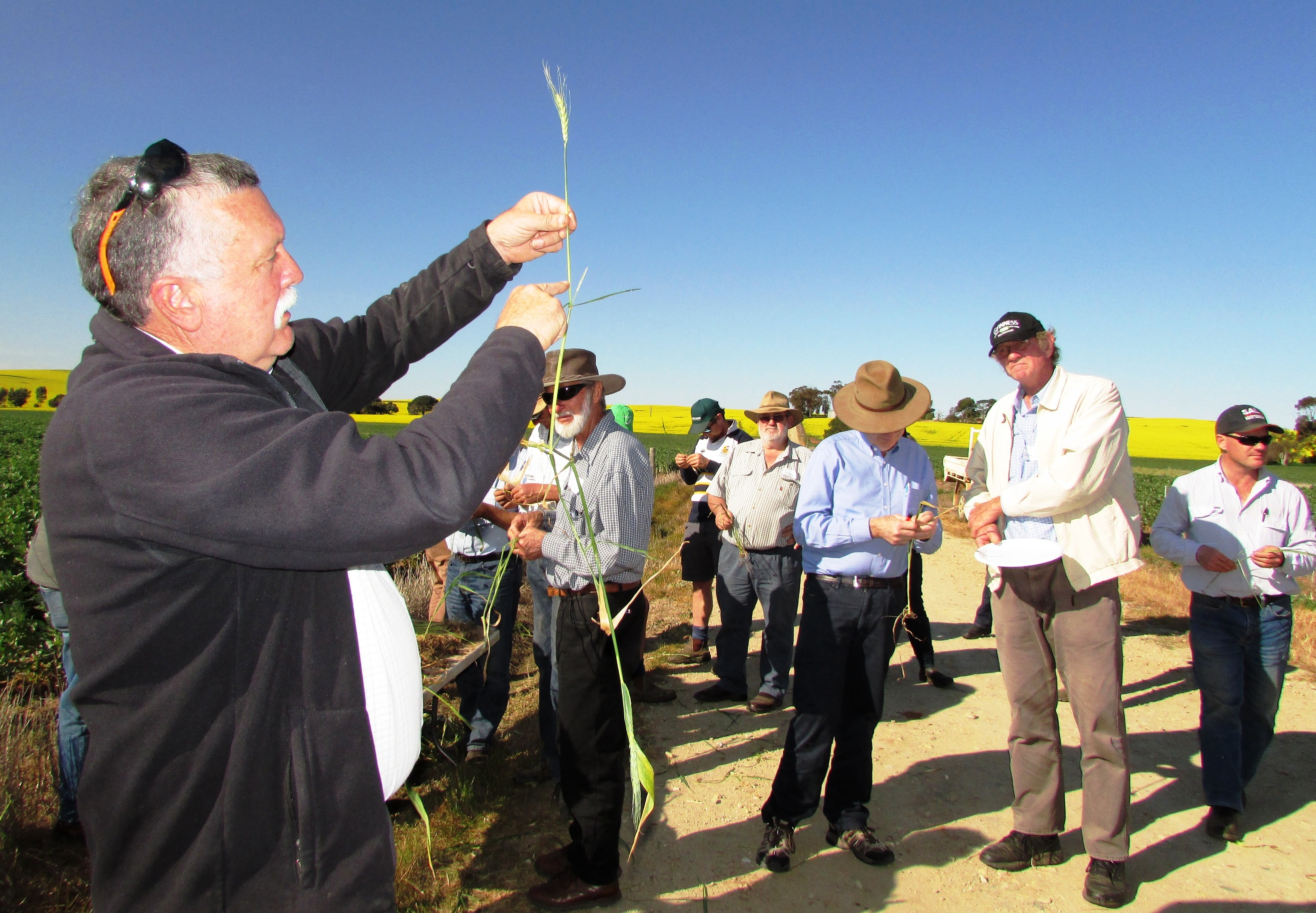 Consultant Mick Faulkner demonstrating how to assess stem frost damage during a GRDC frost management workshop.