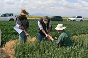 Photo: GRDC Northern Panellists inspect GRDC-funded winter crop trials in northern NSW.