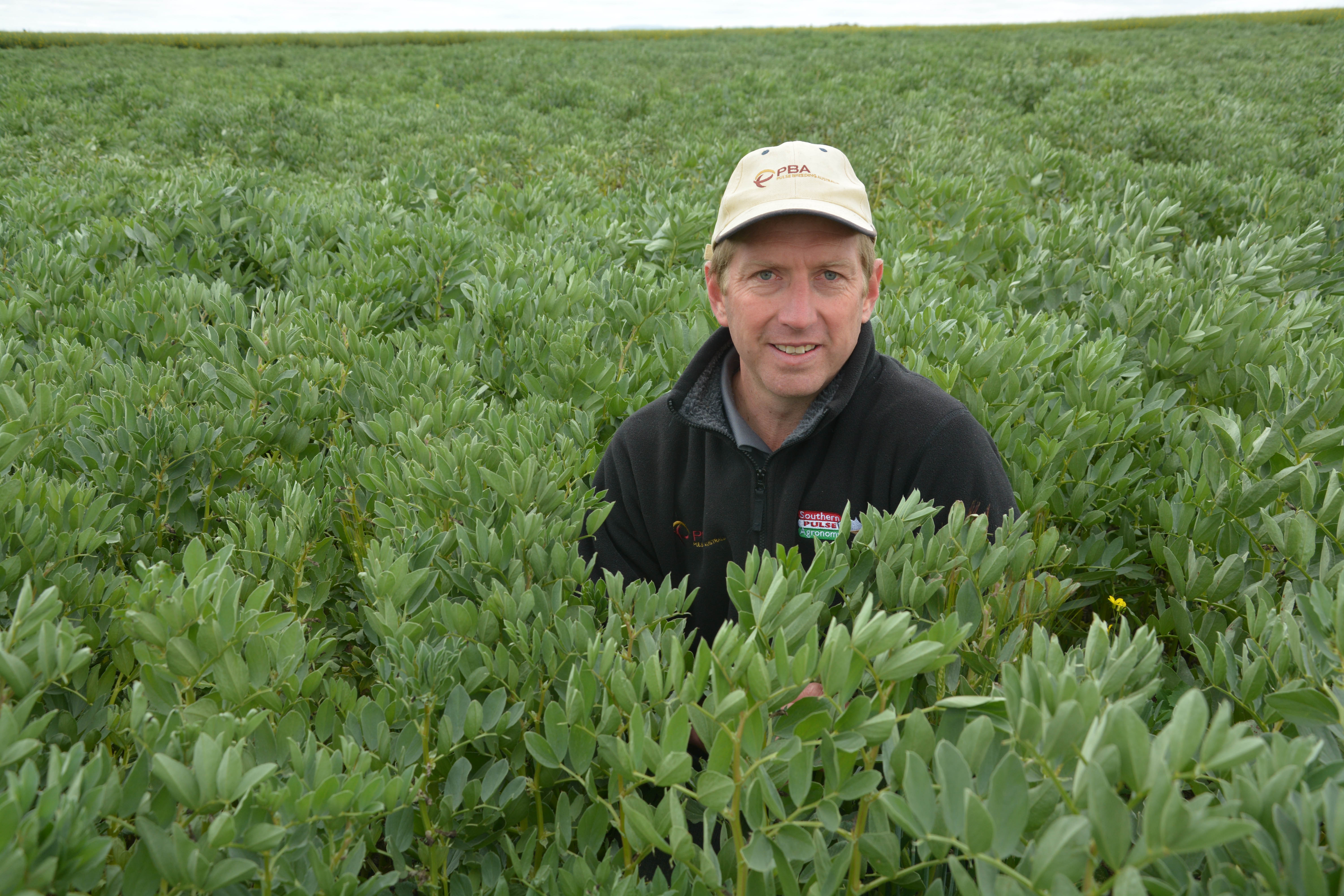 Get Fundamentals Right For Faba Bean Success Grdc