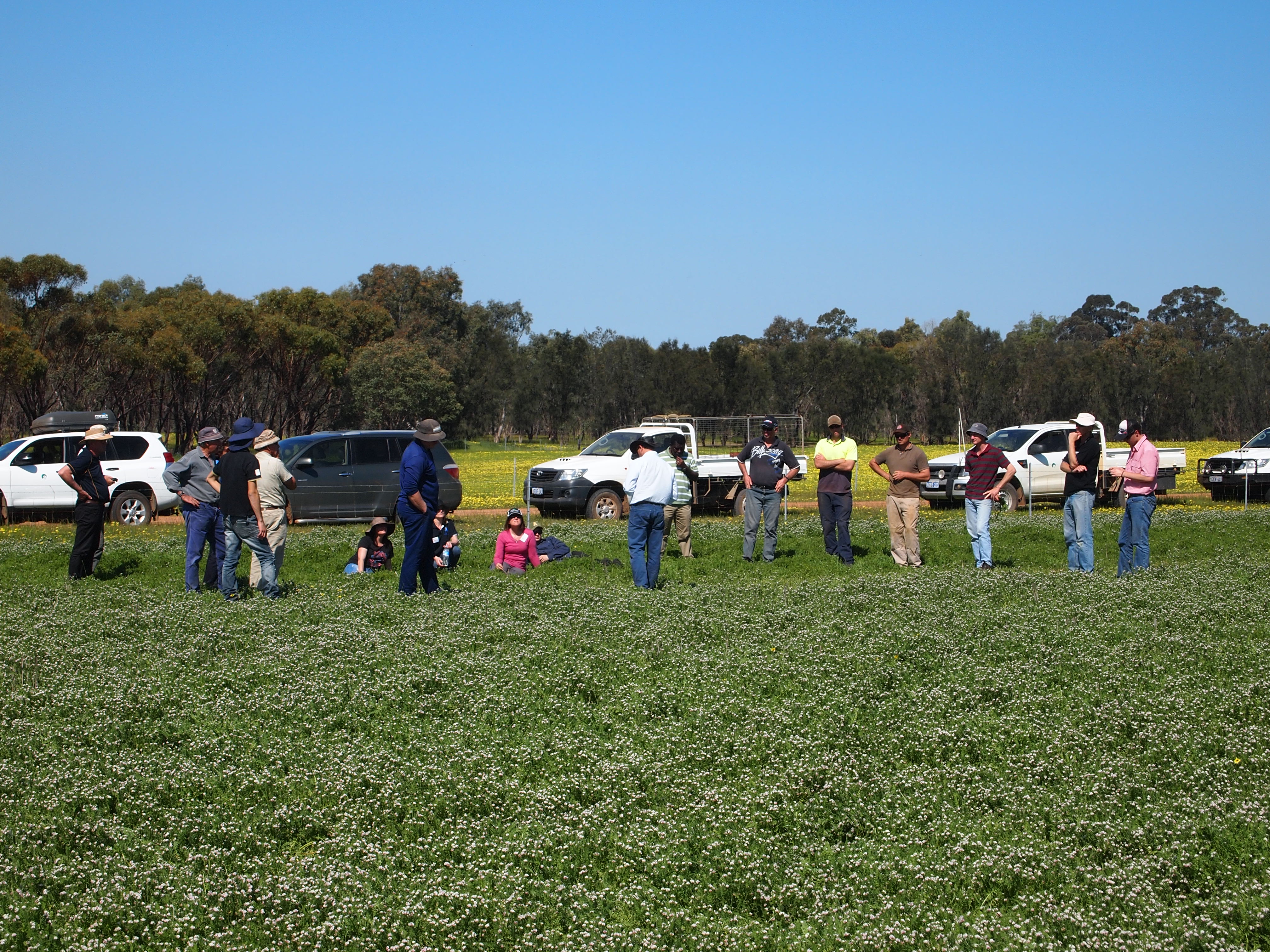 Image of growers standing in a field