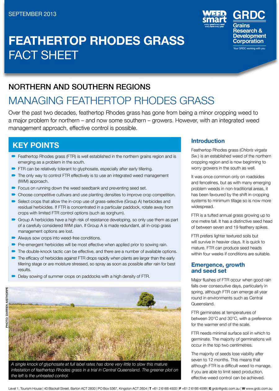 Feathertop Rhodes Grass Fact Sheet cover page