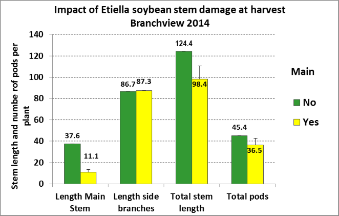 Figure 2.  Impact of Etiella (Etiella behrii) damage to the final size (as measured by stem length and pod numbers) of vegetative soybeans at harvest.  Note that total stem length and total pods were positively correlated (P<0.001).