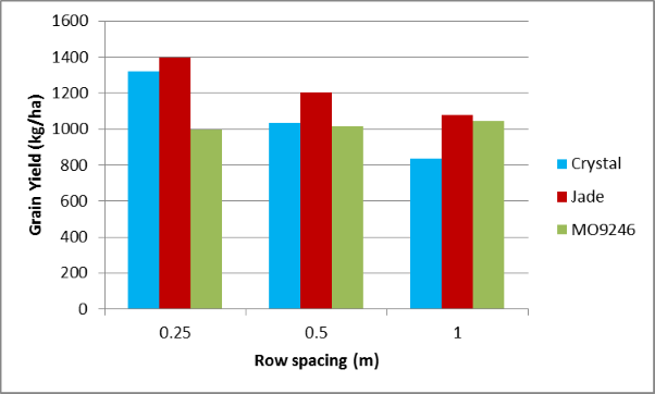 Figure 5. Grain yield of mungbeans at Warra by variety and row spacing treatment (LSD 5% 370)