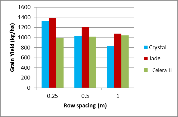 Figure 11. Grain yield of mungbeans at Warra by variety and row spacing treatment (LSD 370kg)