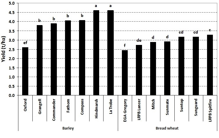 Figure 1. Yield of seven barley and seven bread wheat varieties in the presence of high crown rot infection – Tamworth 2014 (Values are the average of 20th May and 10th June sowing dates; bars followed by the same letter are not significantly different at the 95% confidence level)