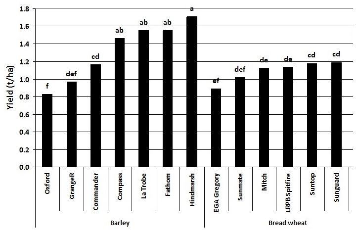 Figure 2. Yield of seven barley and seven bread wheat varieties in the presence of high crown rot infection – Garah 2014 (Values are the average of 2nd May and 12th June sowing dates; bars followed by the same letter are not significantly different at the 95% confidence level)