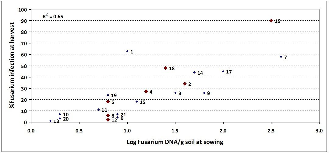 Figure 1. Relationship between at sowing DNA levels of Fusarium using PreDicta B® and incidence of crown rot infection at harvest – 'Unspiked' samples in 2013 Sites spiked with stubble represented by larger red diamonds (sites 2, 4, 5, 8, 12, 16 and 18)