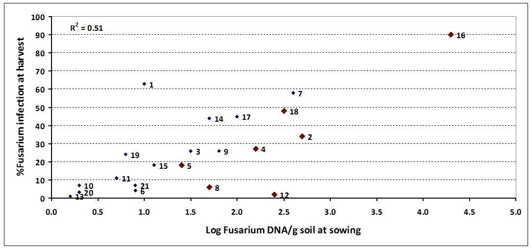 Figure 2. Effect of 'spiked' samples at 7 sites on the relationship between at sowing DNA levels of Fusarium using PreDicta B® and incidence of crown rot infection at harvest – 2013. Sites spiked with stubble represented by larger red diamonds (sites 2, 4, 5, 8, 12, 16 and 18)