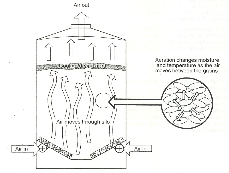 Figure 3. Cooling / drying fronts in the aeration process (C. Newman Agric. WA)
