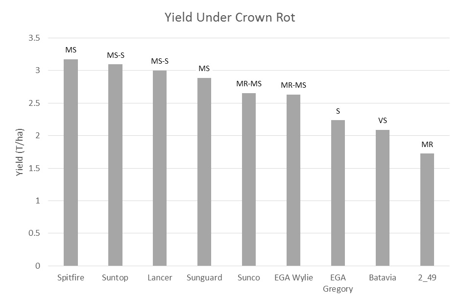 Bar chart showing yield of wheat containing crown rot