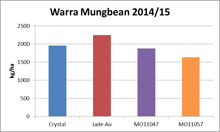 Figure 6. Warra 2014/15 mungbean variety yields, all row spacings (LSD 5% 562)