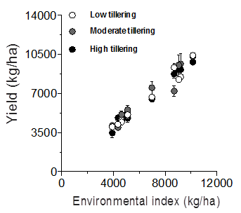 Figure 4. Sorghum yields as a function of the environmental index grouped by tillering type.