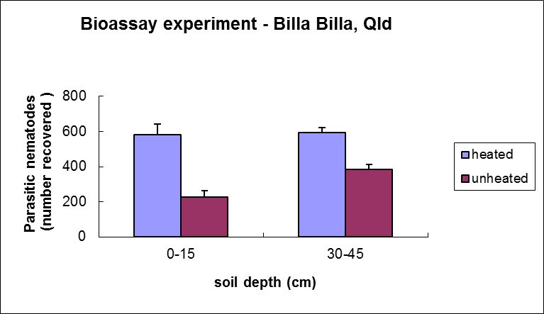 Figure 1.  Results of one bioassay on a soil from a cropped (wheat/sorghum) paddock from Billa Billa showing that biological suppression of parasitic nematodes (difference between numbers recovered after adding nematodes to the heated and unheated soils)  is greater  in the 0-15cm layer of soil than in the 30-45  cm layer