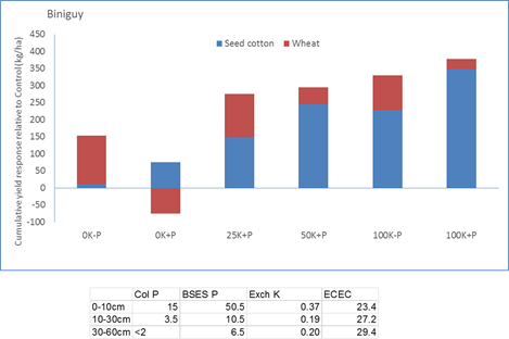 Figure 10. Seed cotton (2013/14) and wheat (2015) yield responses to banded applications of K, in the presence or absence of deep P bands, in a site at Biniguy. Data is presented as the yield response relative to the Farmer Reference treatment (no disturbance or deep nutrient placement)