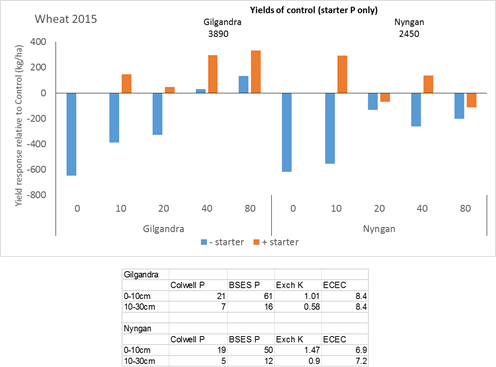 Figure 9. Grain yields from 2015 wheat crops at Nyngan and Gilgandra in response to both starter P and additional P at various rates placed either shallow (5cm) or deep (20cm). Data are shown for the average of the 2 application depths