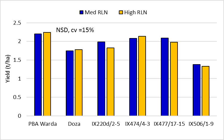 Figure 3.  Faba bean variety yields in the 'medium' and 'high' Pt strips  (Doza and PBA Warda are protected under the Plant Breeders Rights Act 1994)