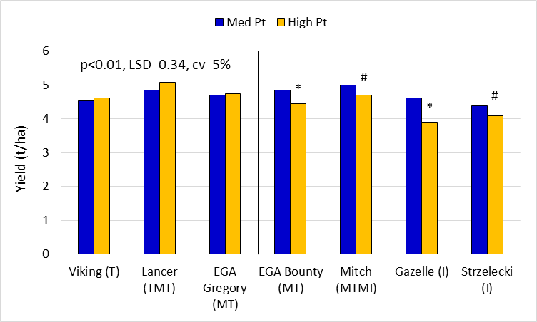 Figure 5.  Early sown wheat yields for key lines in the 'med' and 'high' Pt strips. (Lancer, EGA Gregory, EGA Bounty, Mitch, Gazelle and Strzelecki are protected under the Plant Breeders Rights Act 1994)