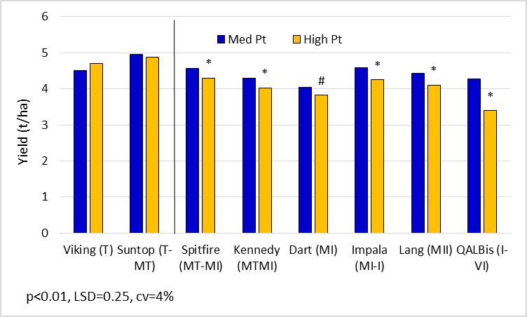 Figure 6.  Main sown wheat yields for key lines in the 'med' and 'high' Pt strips. (Suntop, Spitfire, Kennedy, Dart, Impalaand Lang are protected under the Plant Breeders Rights Act 1994)