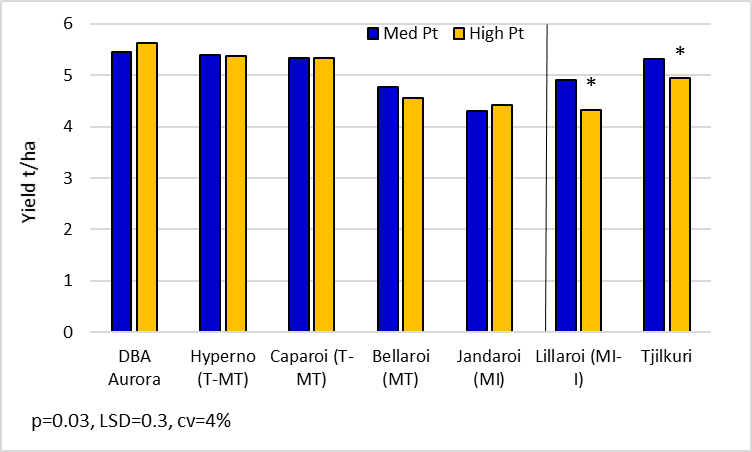 Figure 7.  Durum yields for key lines in the 'med' and 'high' Pt strips.  (DBA Aurora, Hyperno, Caparoi, Bellaroi, Jandaroi, Lillaroi and Tjilkuri are protected under the Plant Breeders Rights Act 1994)