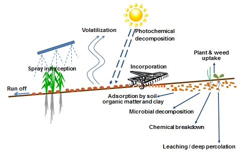 Figure 1. Pathways for herbicide degradation, loss and movement