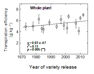 Figure 3. Change in transpiration efficiency for whole-plant dry biomass for varieties released between 1973 and 2012.