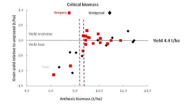 Figure 3. (a) shows that for a 4.4 t/ha target yield in wheat, around 8.0 to 9.0 t/ha was required at anthesis, and treatments with less than this had reduced yield. (b) shows that residual biomass after grazing of >0.5 t/had in late July was sufficient to reach the critical anthesis biomass for 4.4 t/ha yield.