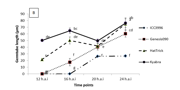 Figure 2. Significant differences were observed among the physiological traits of a highly pathogenic isolate FT13092-1 from Kingsford, SA when inoculated onto chickpea genotypes that are resistant (ICC3996 and Genesis090), moderately resistant (PBA HatTrick) or susceptible (Kyabra). Where A = the percentage of germinated spores and B = the germtube length over time after inoculation.