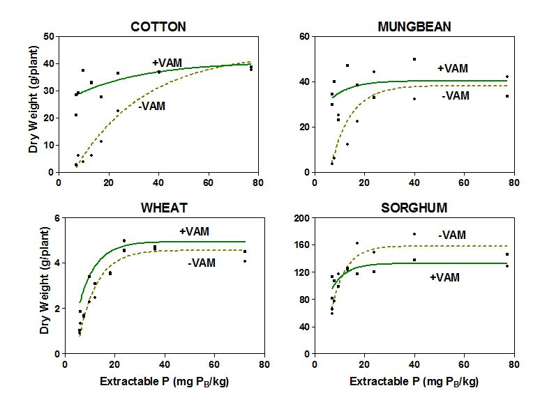 Figure 1.  Dry weight response of crops to increasing P levels with and without mycorrhizal fungi in the soil.