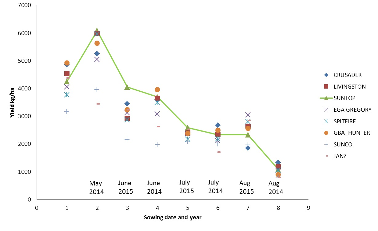 Figure 1. The yield of released cultivars across dates of sowing at Narrabri between 2014 and 2015 (Suntop, Spitfire, EGA Gregory, GBA Hunter, Livingston, Crusader in the graph above are all  protected under the Plant Breeders Rights Act 1994.)