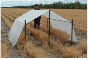 Figure 2. Wetting up for Drained Upper Limit (DUL) determination and rainout shelter used for crop specific crop lower limit (CLL) determination.