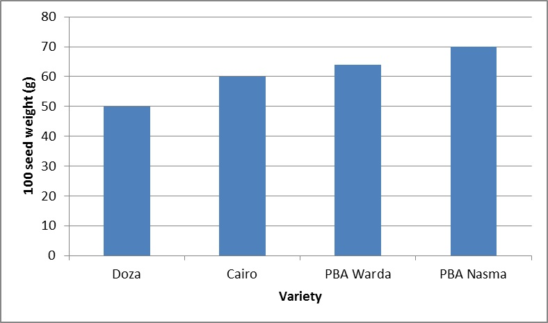 Figure 1. Average 100 seed weight (g) for selected faba bean varieties