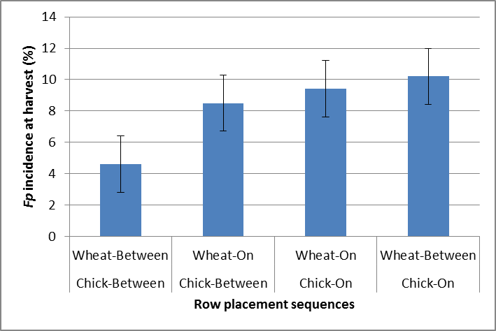 Figure 3. The interaction of chickpea row placement (2013) and wheat row placement (2014) on the incidence of Fp in wheat