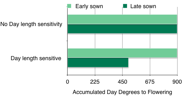 Figure 6.How daylength can reduce the flowering thermal time target, that is, the number of accumulated degree days required to reach flowering.