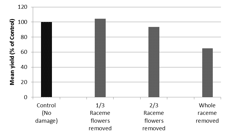 Figure 1. Aggregate treatment yields across 8 sites near Spring Ridge NSW, 2014, expressed as a percentage of the control.