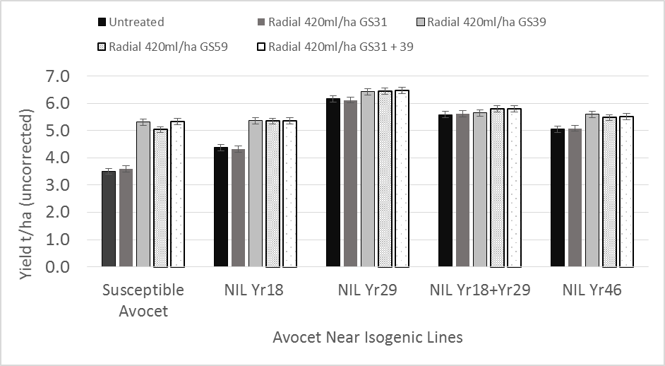 Figure 8. Influence of different APR genes Yr18, Yr29 & Yr46 in a common Avocet background on fungicide response from different application timings.