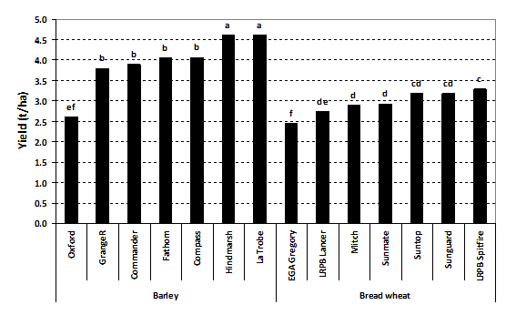 Figure 1. Yield of seven barley and seven bread wheat varieties in the presence of high crown rot infection – Tamworth 2014