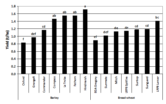 Figure 2. Yield of seven barley and seven bread wheat varieties in the presence of high crown rot infection – Garah 2014