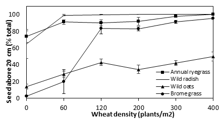 Figure 2. Influence of crop competition on the seed retention height of annual ryegrass, wild radish, wild oats and bromegrass