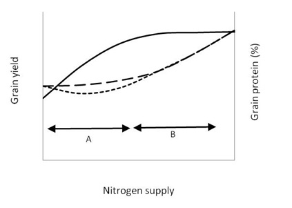 Nitrogen decision - Guidelines and rules of thumb - GRDC