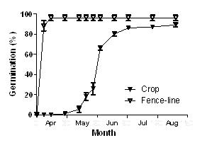 Figure 1. Germination of in crop or fence-line populations of brome grass from a field at Warnertown, SA.
