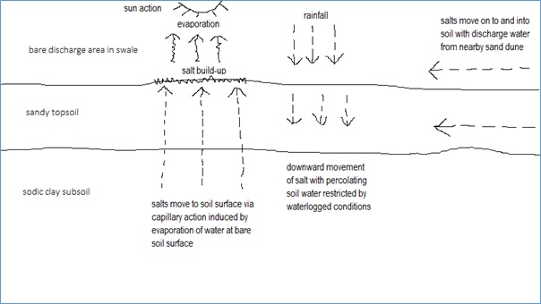 Figure 2: Salt movement within a swale soil in a bare discharge seepage area.